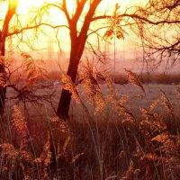 ... в ветвях запутался закат... :: Светлана