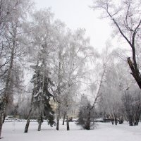 Здравствуй, гостья- зима! :: раиса Орловская