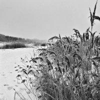 Зимние зарисовки 12 :: Алексей Масалов