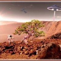 И на Марсе будут яблони цвести. :: Anatol Livtsov