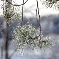 Снег иголками летит.. :: Наталья Соколова