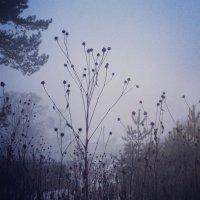 В тумане :: Алёна Бадьина