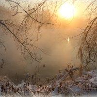 В паутине ветвей :: Мария Кухта