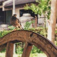 Птица :: Евгений Подложнюк