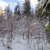 Лесной маскарад . :: Мила Бовкун