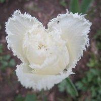Цветок необычный :: Дмитрий Никитин