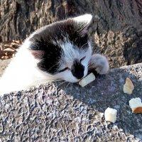 На безрыбье и хлебушек вкусен! :: Наталья