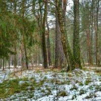 Трава из-под снега :: Милешкин Владимир Алексеевич