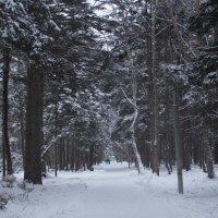 аллея в парке :: Наталья Литвинчук