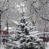 Зимняя красавица в городе. :: шубнякова