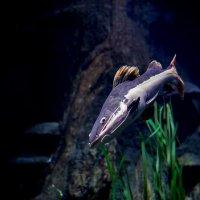 Рыба :: Андрей Анисимов