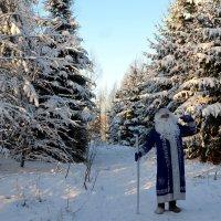 С Новым годом, друзья! :: Владимир Буев