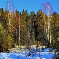 Лес в декабре :: Сергей Чиняев