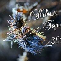 С Новым Годом :: Александр Ведмидь