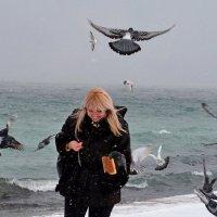 Кормёжка птиц :: Виктор Шандыбин