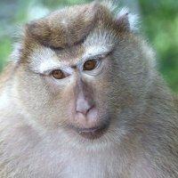 С годом обезьяны,друзья!!!!!!! :: Антонина