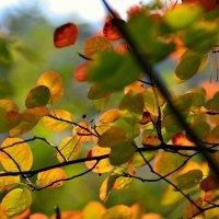 Вспоминая Осень... :: Облачко *