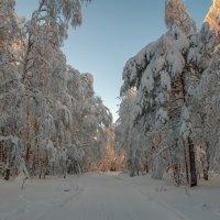 Лесная дорога :: vladimir