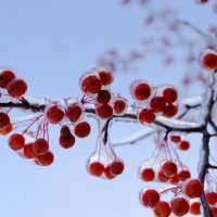 Зима...  Apple (мелкий) :: Сергей Николаевич