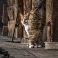 Полтора котейки :: Cлава Украине