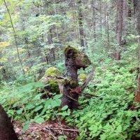 в лесу... :: helga 2015