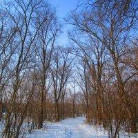 Зимний пейзаж :: Татьяна ❧