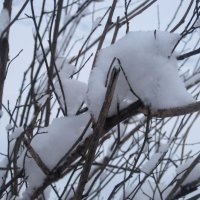 Зима рисует.. :: Елена Семигина