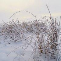 холодно :: Ида Слизких
