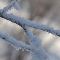 Снег :: Майя Смехова