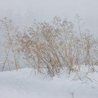 Зимний этюд - 2 :: Евгения