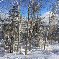Зима на Сахалине ! :: Татьяна ❧