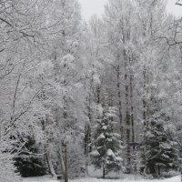 Прошлогодняя зима... :: Светлана Петошина