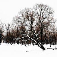 Зимняя графика 3 :: Виктор Никитенко