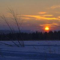 Мороз и солнце в чудесный январский вечер :: Владимир Максимов
