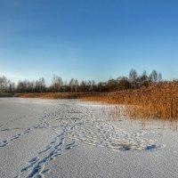 Наследили рыбаки :: Милешкин Владимир Алексеевич