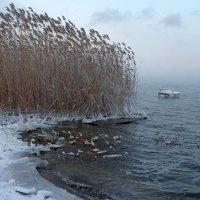 ... в январе... :: Александр Герасенков