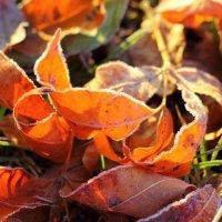 Осенние листья в легкой изморози :: Marina K