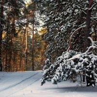Морозец лёгкий...Тишина... :: Лесо-Вед (Баранов)