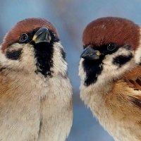 Кстати о птичках... Новогодней сказки эпилог... :: Александр Резуненко