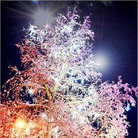 Новогодний арктический тополь для Лены из Севастополя... :: Кай-8 (Ярослав) Забелин