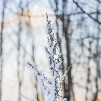 Зимние мотивы :: Юля Колосова