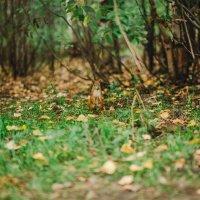 В лесу :: Galya Chikunova
