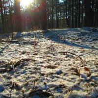 Зима в лесу :: Яна