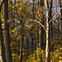 В лесу :: Ольга Винницкая