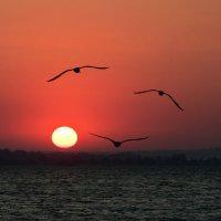 И небо улыбнулось чайками, рассвет румянцем залило :: Сергей Орлов