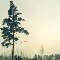 На закате :: Александр Никишков