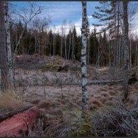 на пути к маленькому озеру среди большого леса :: liudmila drake