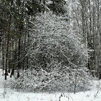Творчество Деда мороза :: Милешкин Владимир Алексеевич