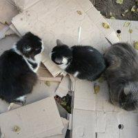 кошачьи истории :: tgtyjdrf