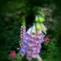Ядовитый цветок :: Сергей Карачин